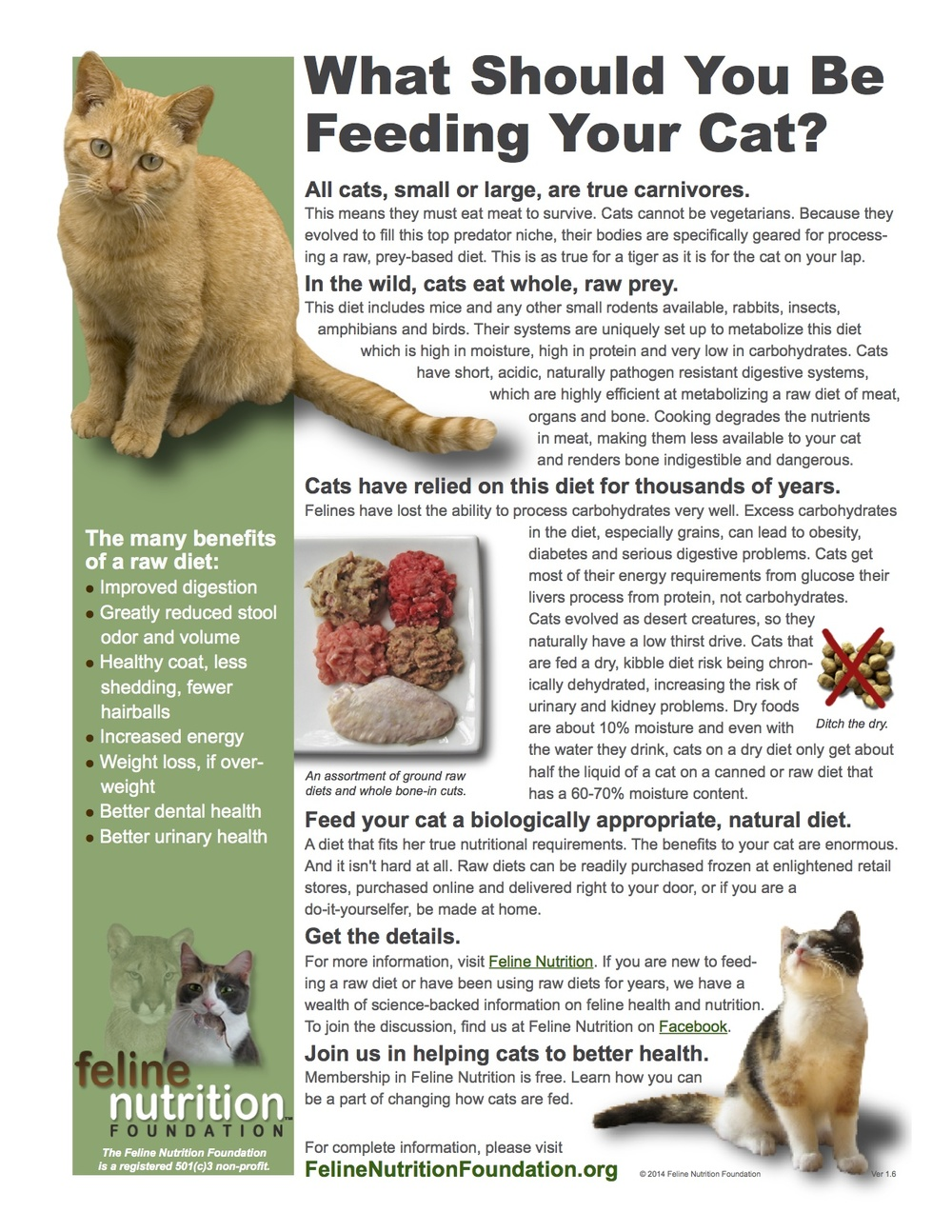 Dangers Of Raw Food Diet For Cats