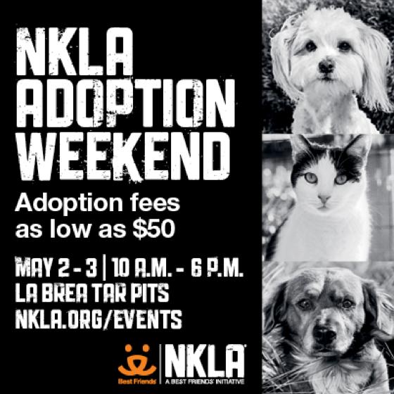 Instagram NKLA Adoption Weekend x560