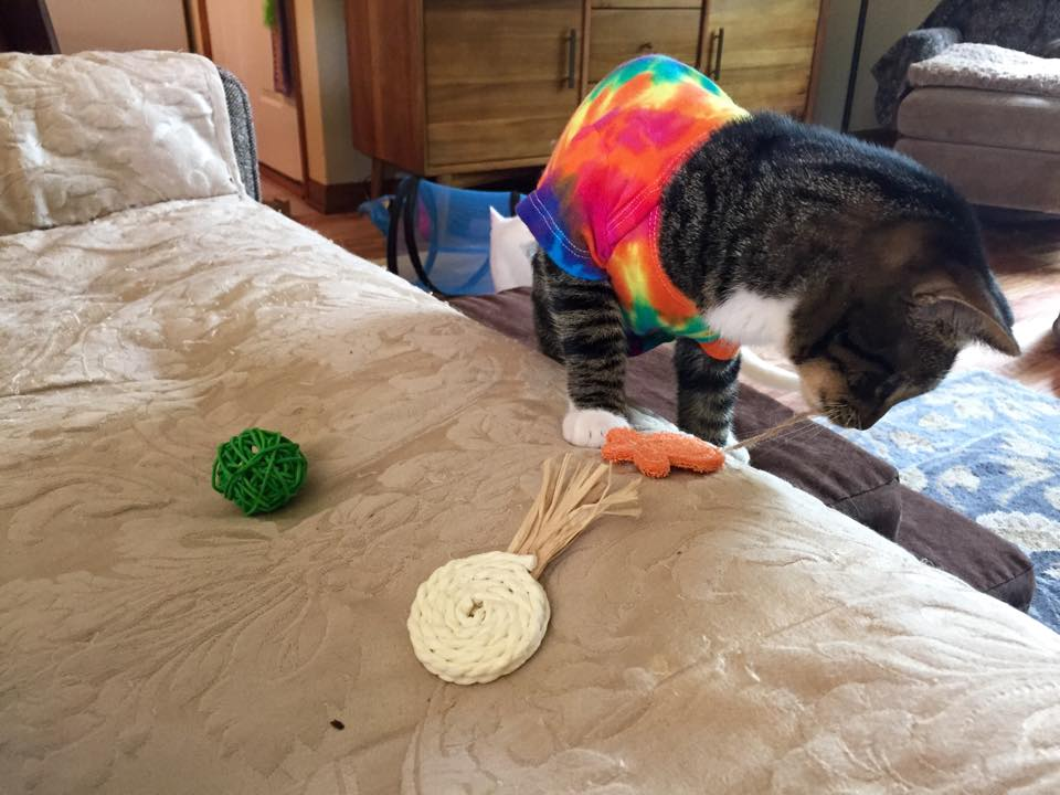 Chewing on a cat toy made of natural materials from the Jackson Galaxy Collection