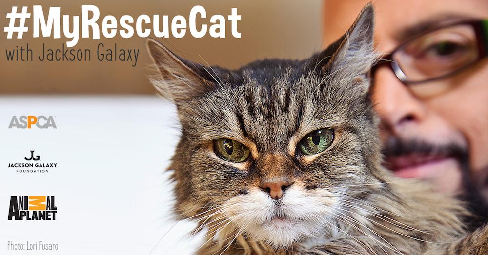 my-rescue-cat_052015_facebook-optimized_1 x1000