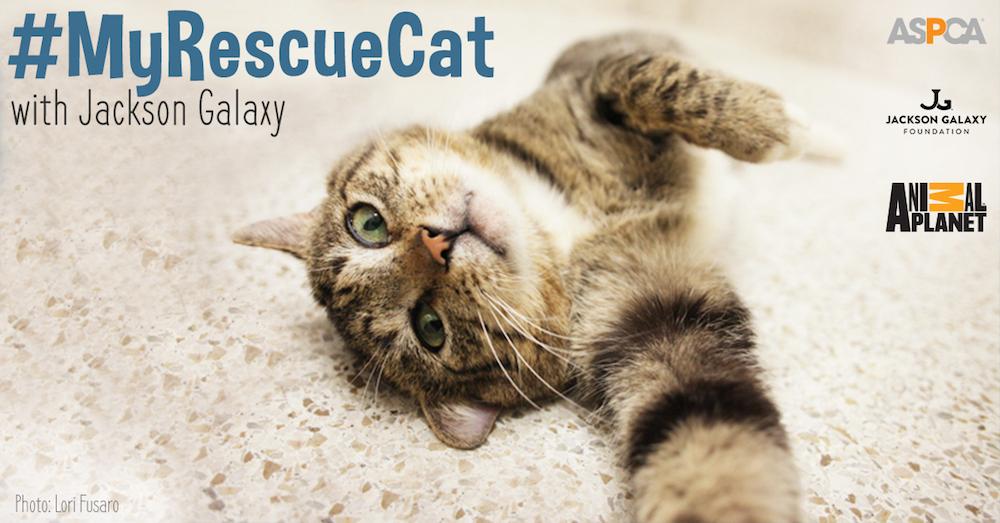 my-rescue-cat_052015_facebook-optimized_2 x1000
