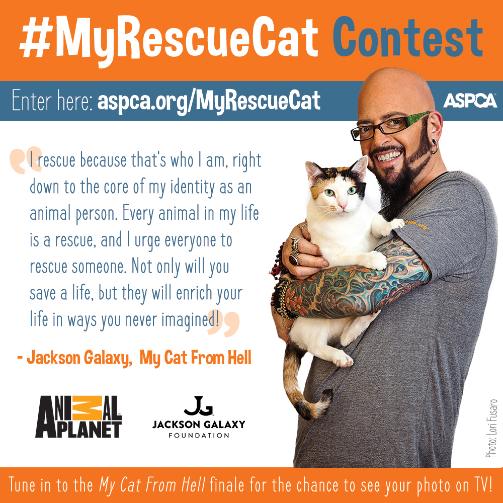my-rescue-cat_052015_square