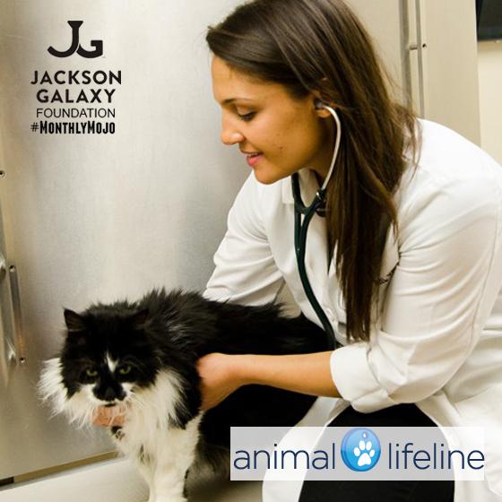 AnimalLifeline 4