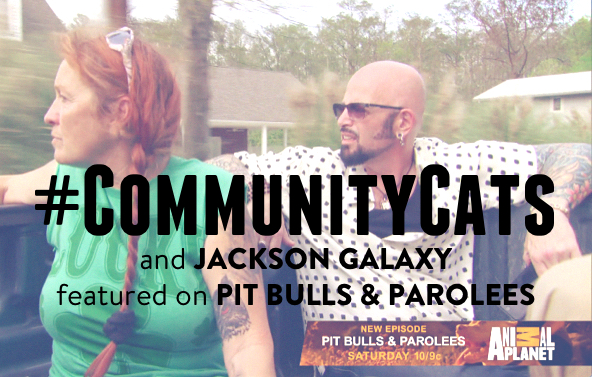 PitBullsandParolees