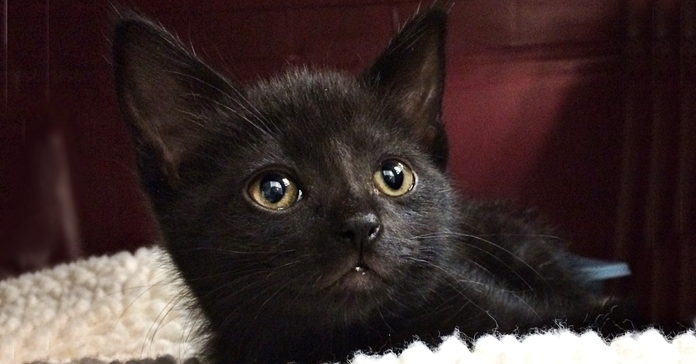 The day Salem arrived at the rescue