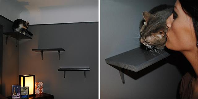 DIY Cat Shelves