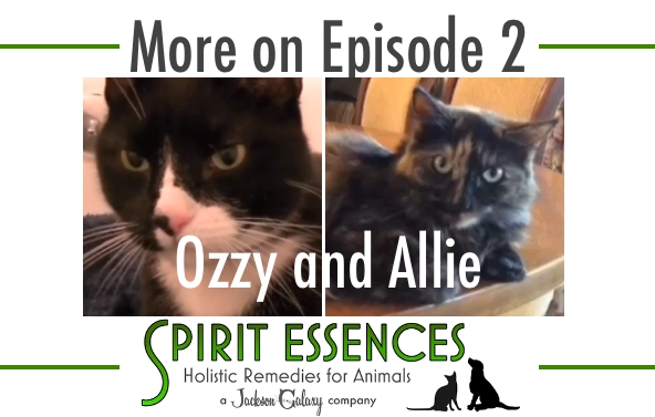 SE More on Ep 2 Ozzy Allie