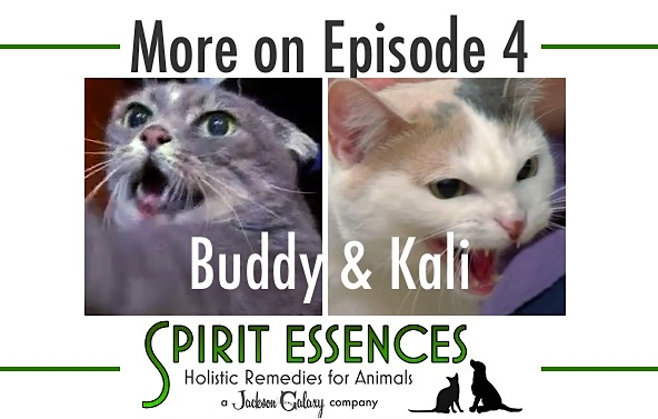 SE More on Ep 4 Buddy Kali