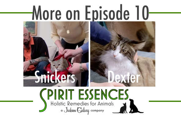 SE More on Ep 10 Snickers, Dexter