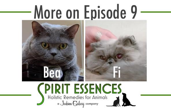 SE More on Ep 9 Bea, Fi