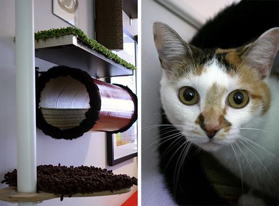 My Cat From Hell, Kashmir & Darla Catification