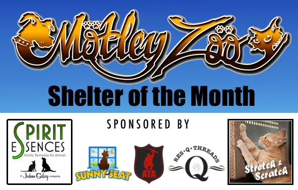 Shelter - Motley Zoo