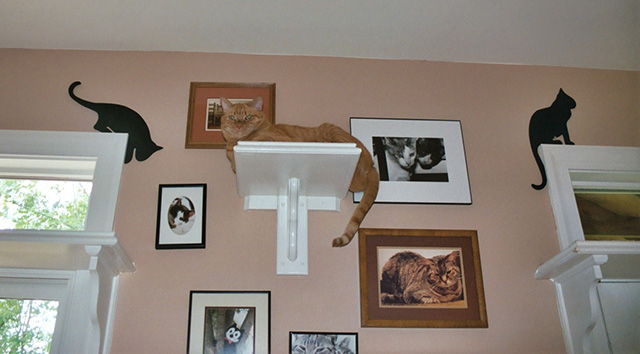 CatClimbingShelves2
