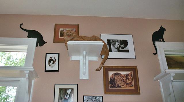 CatClimbingShelves2