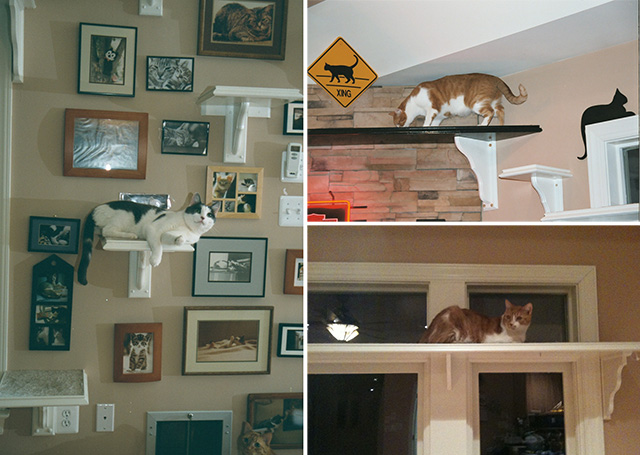 CatClimbingShelves3