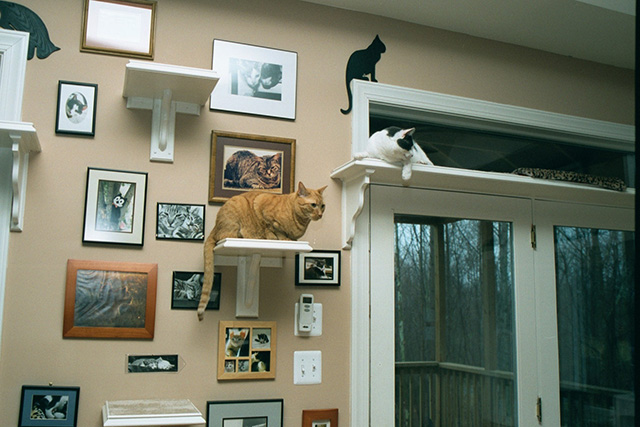 CatClimbingShelves4