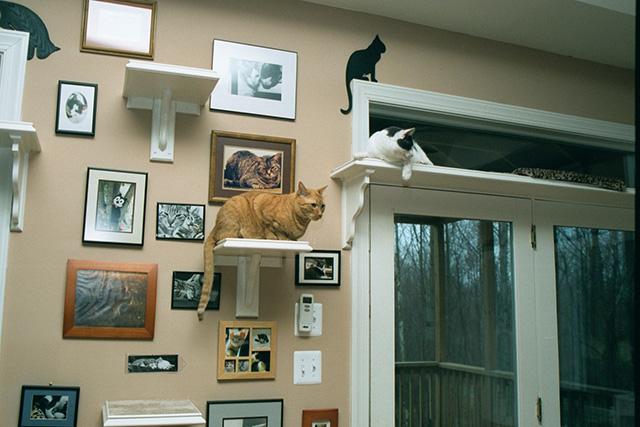 CatClimbingShelves4