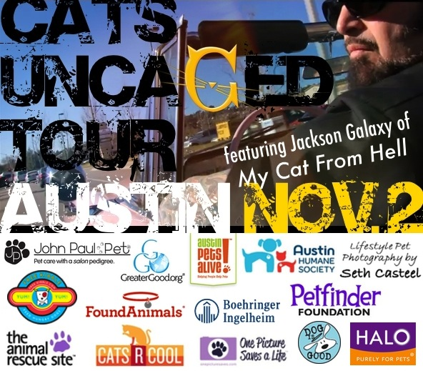Cats Uncaged Tour AUSTIN blog