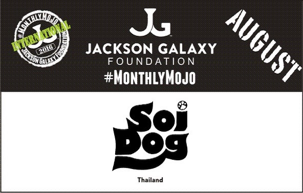 Soi Dog Foundation Thailand slider