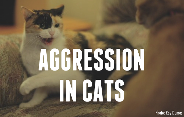 Aggression in cats jackson galaxy for Jackson galaxy cat mojo