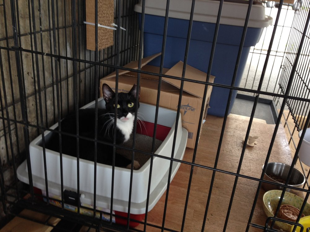 Alfreda is slowly introduced to her new home in habituation space, designed to get her comfortable in her new home