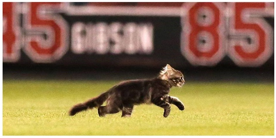 Rally Cat hits the field!