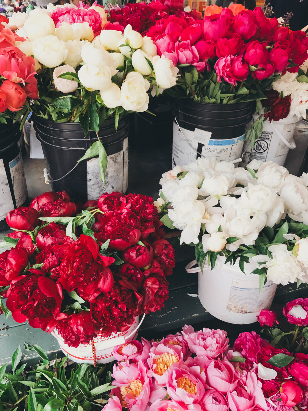 Peonies. Peonies. Peonies. Enough said.