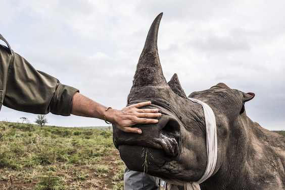 """""""South African Ranger Peter Chadwick exposed the complex human/animal challenges in supporting Africa's Conservation Ranger Force."""""""
