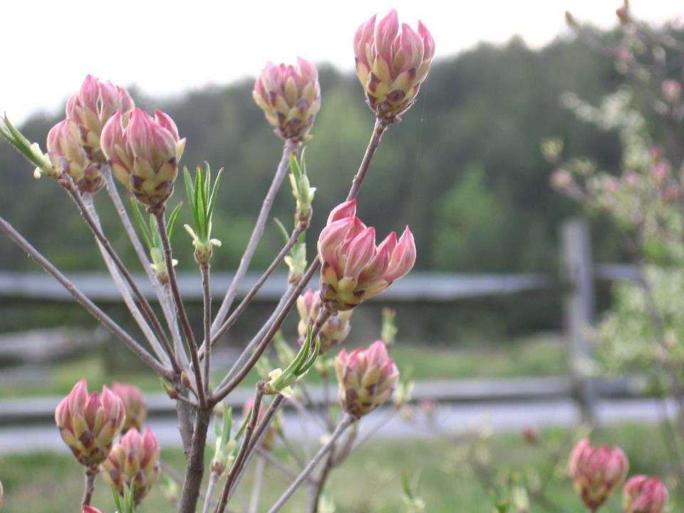 Flower Durham.jpg