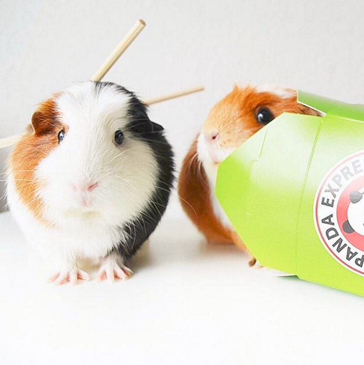 These are her darling guinea pigs on Halloween! Click the image to see more of Jenna's Instagram pics.