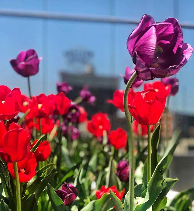 April 🌧 bring May 🌷