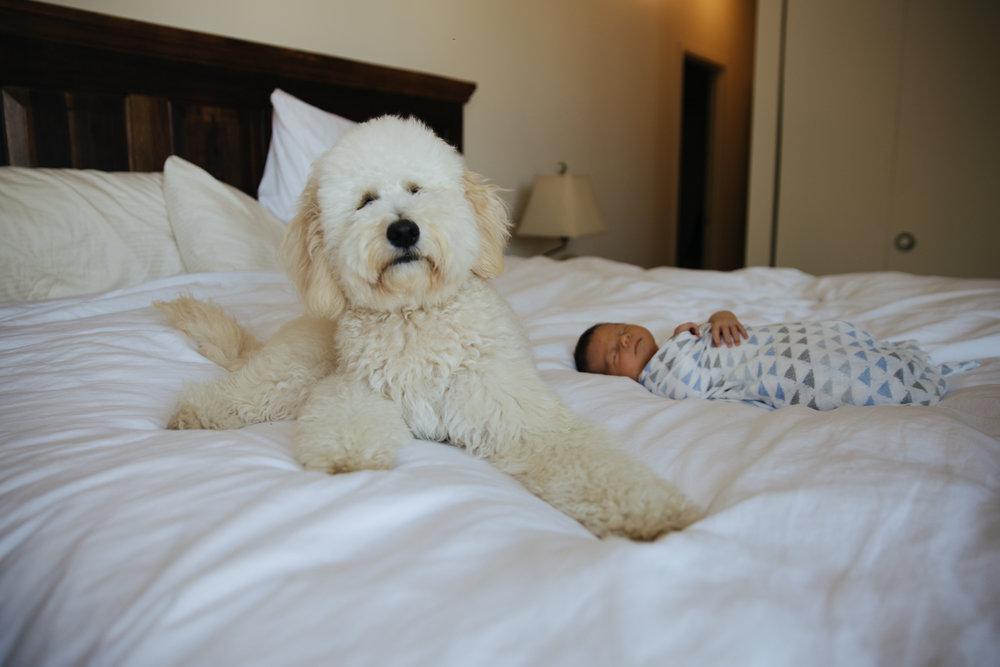 Alimegreendream-Newborn-and-dog-Photography -1.jpg