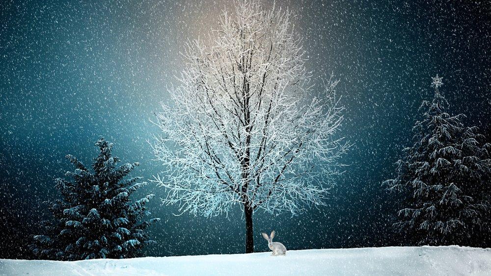 winter-2896970.jpg