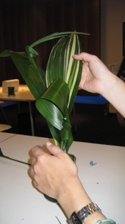 Tying leaves after establishing structure.