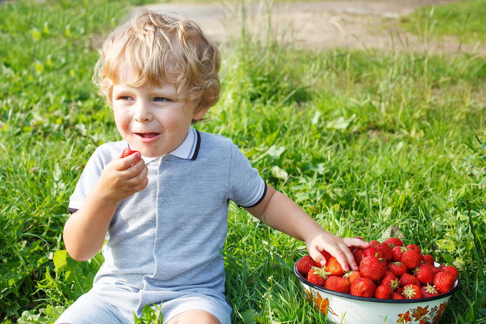 Website - Toddler eating strawberries.jpg