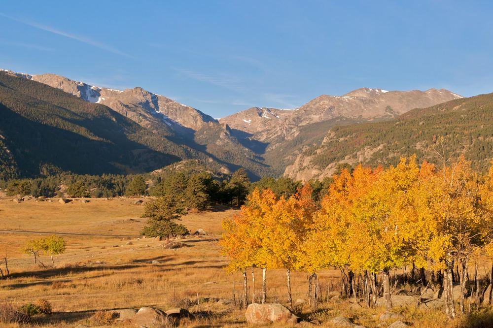 fall meadow.jpg