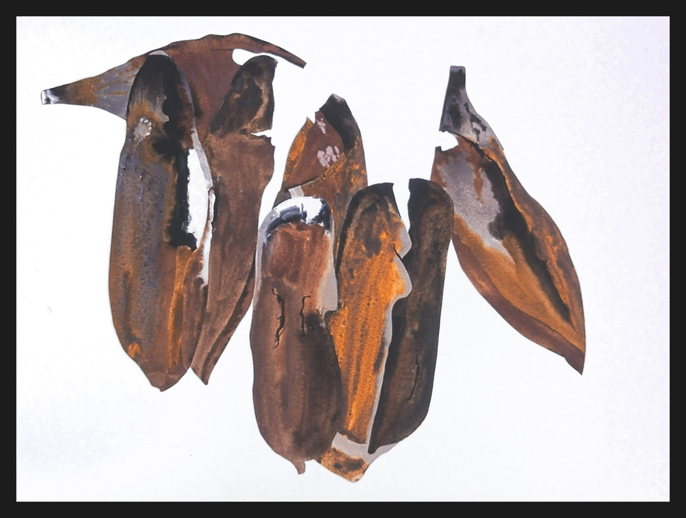 Petal Series 8 Magnolia