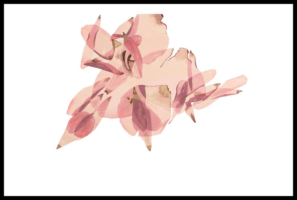 Poppy Petals 43