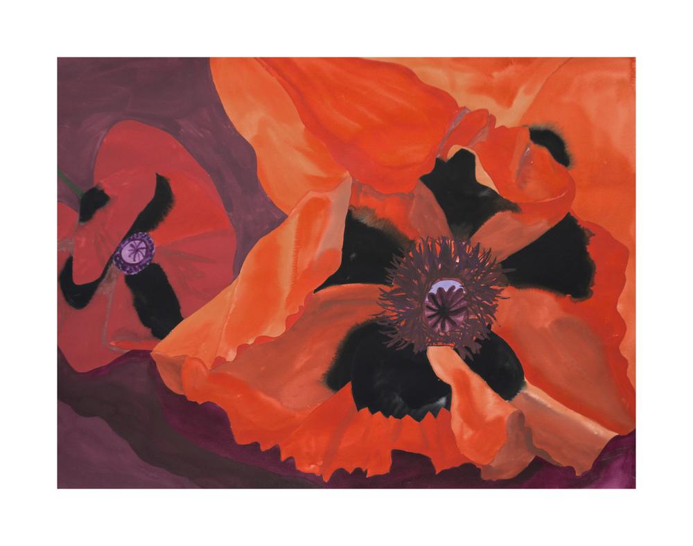 Lady Poppy + Oriental Poppy