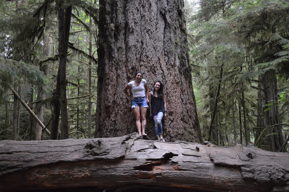 The biggest tree in Cathedral Grove.