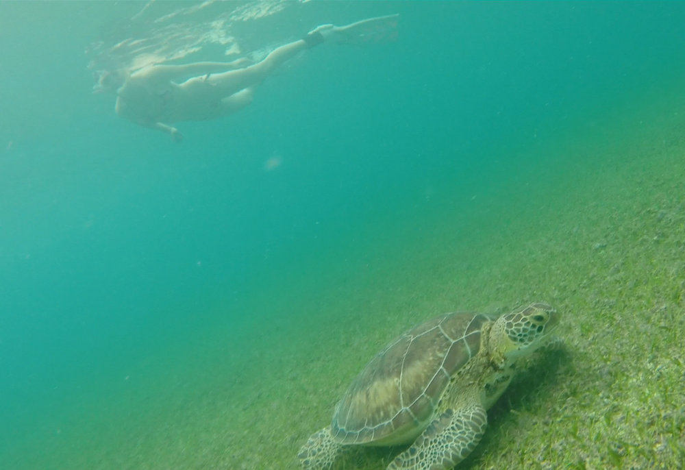 turtles_akumal_bay.jpg