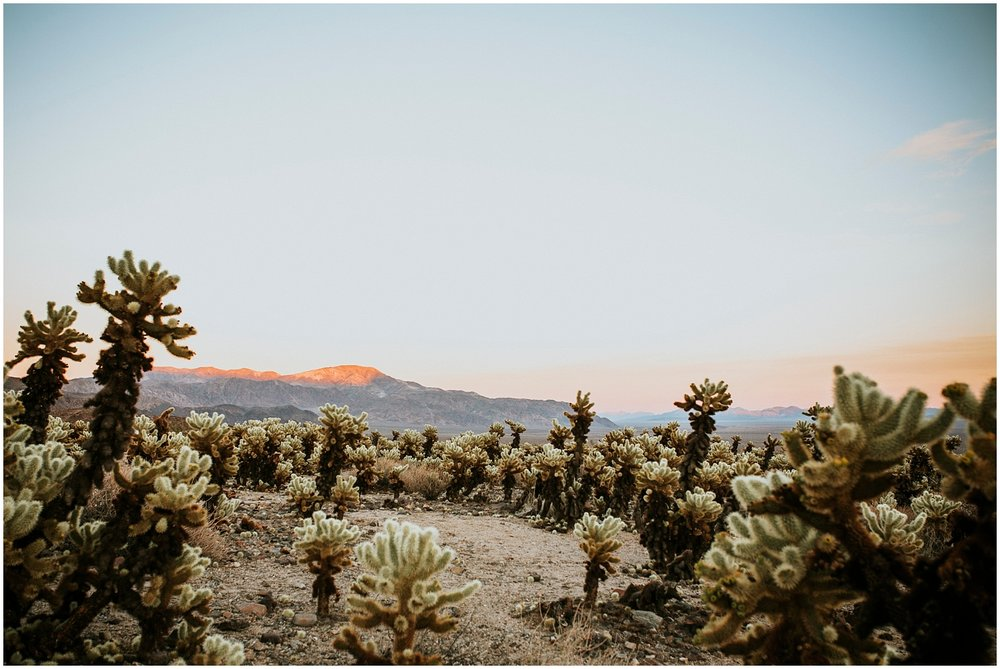 Joshua Tree Engagement (9).jpg