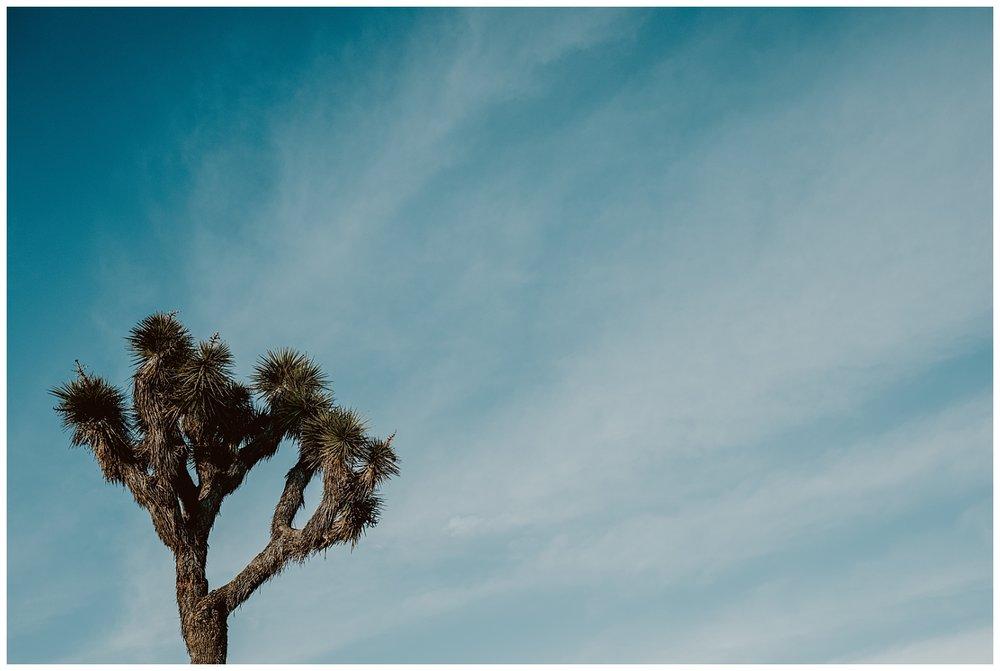 Joshua Tree Park Engagement (26).jpg