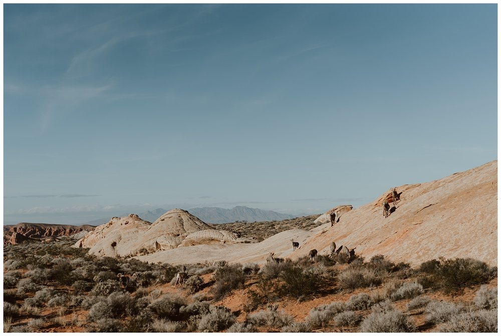 Valley of Fire Engagement (1).jpg