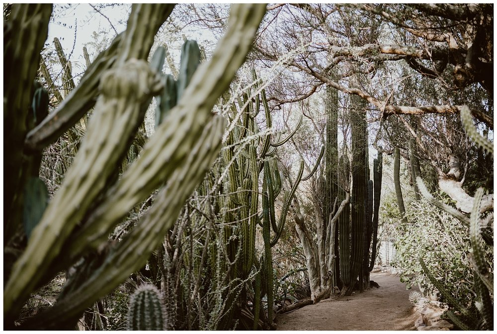 Palm Springs Engagement 002.jpg