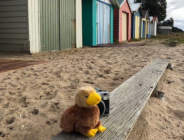 Admiring the views in front of the Dromana beach boxes.