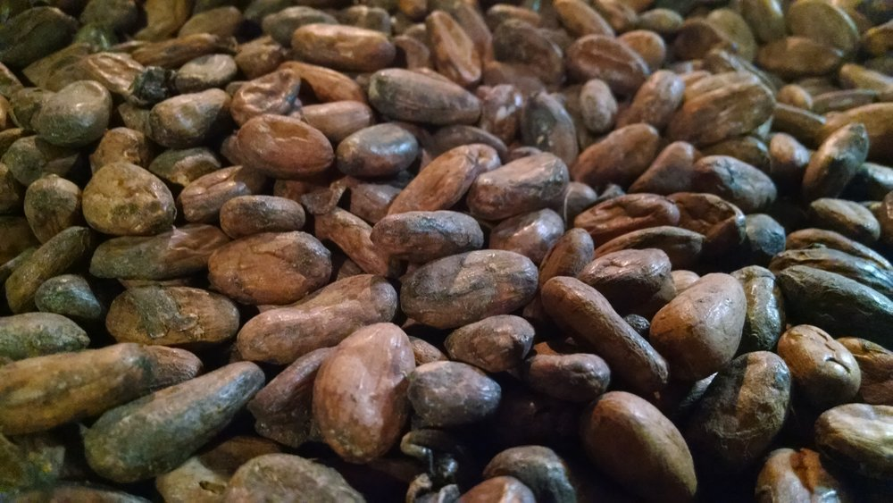 "These beans from Ghana are not considered ""fine flavor"" grade--but thanks to proper fermentation and drying, they make wonderfully rich chocolate."