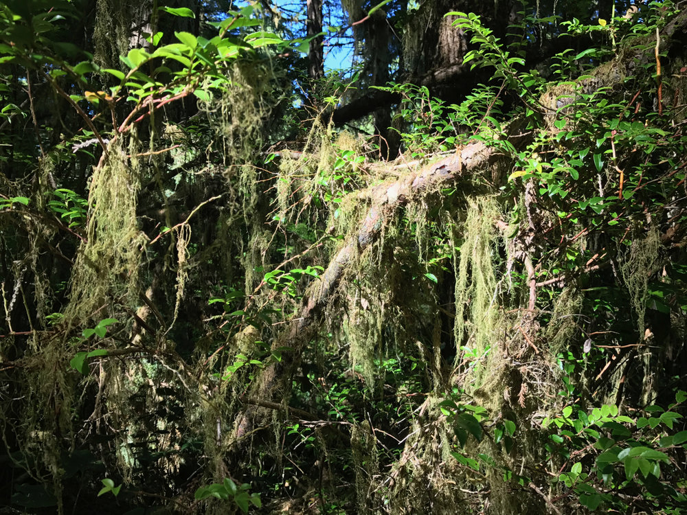 The Coastal Temperate Rainforest of Pacific Rim National Park Reserve