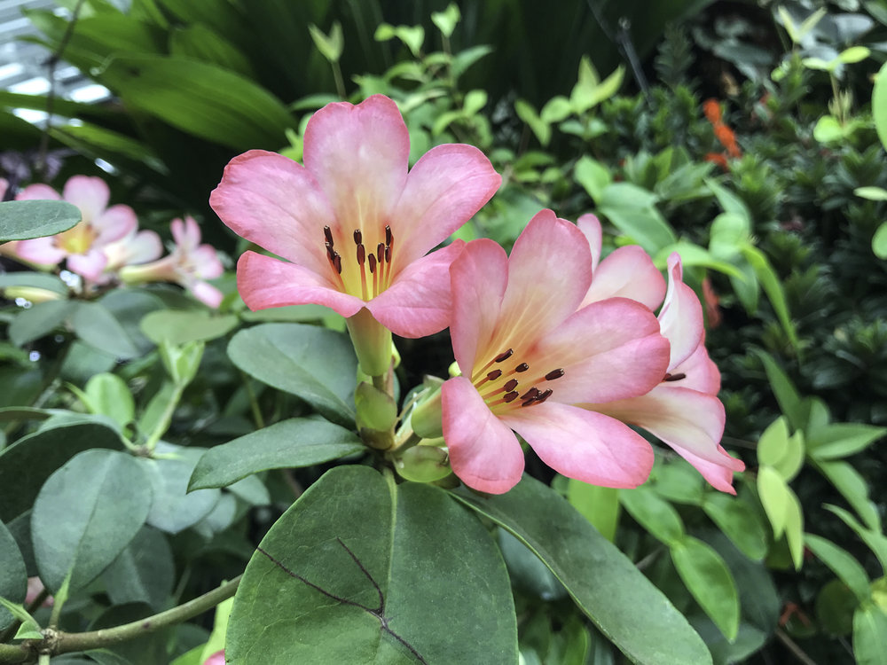 GardensByTheBay-10.jpg