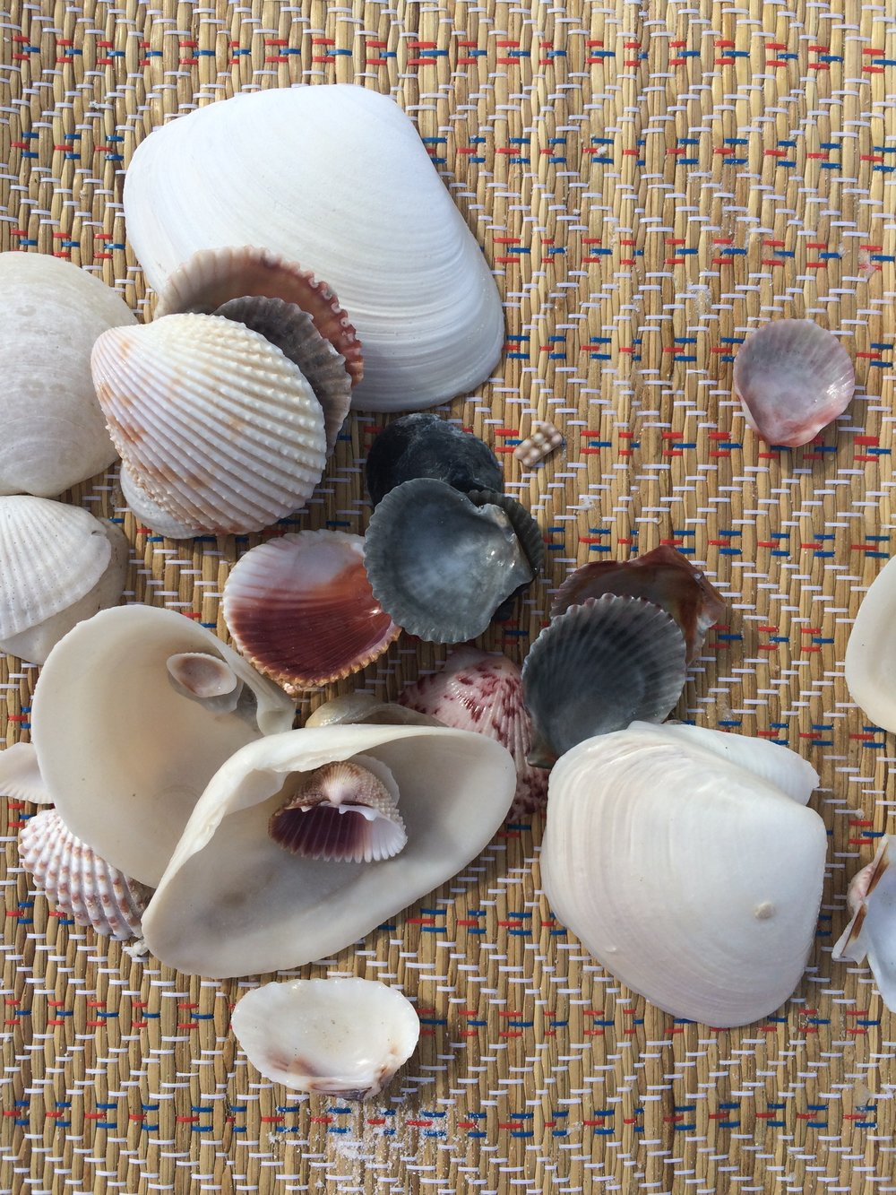 Beach finds from Marco Island, FL.